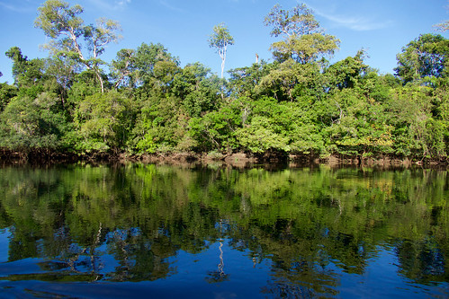brazil-amazon-cristalino-lodge-riverbank-of-cristalino-river-copyright-thomas-power-pura-aventura