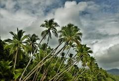 Playa Uvita (Travicted Photography) Tags: travel centralamerica centroamerica costarica puravida playa beach playauvita uvitabeach parquenacionalmarinoballena