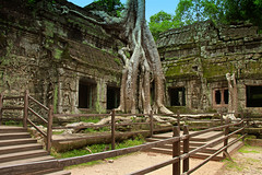 Roots and Ruins of Ta Prohm, Cambodia (Chandana Witharanage) Tags: cambodia asia southeastasia taprohmtemple ruins angkorwat siemreap overgrown roots bayon rajavihara unescoworldheritagesite khmertemple architecture archaeologicalsite doorway history buddhist buddhism smileonsaturday fancyfence 18thmay2019