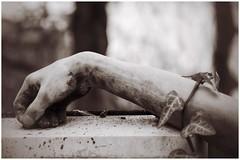 the tender embrace (***étoile filante***) Tags: plant pflanze arm sculpture cemetery emotions emotional soul soulful souldeep poetisch poetic monochrome sepia dof bokeh