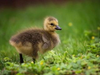 Little Fluff Ball �