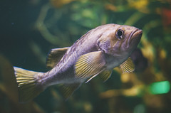 (onapaperplane) Tags: baltimore aquarium squirrel fish eyes fisheye blue aquatic under sea moon jellyfish touch tank lxc lots arapaima scales amazon water