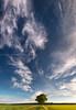 cirrus bewolking (Karin Broekhuijsen Fotografie) Tags: 20170524 drenthe geoparkdehondsrug unescoglobalgeopark akkerbouwgebied bewolking bomen boom breedbeeld cirrus hogebewolking hogesluierbewolking ijskristallen landschap lente mei metereologischverschijnsel nederland panoramafoto panoramisch platteland sluierwolken voorjaar weersverschijnsel windveren wolken zandpad exloo nl