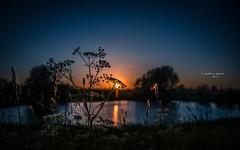 The last sparks of sundown (Ingeborg Ruyken) Tags: pond 500pxs spring dropbox empel sunset evening zonsondergang water avond lente natuurfotografie wiel may flickr mei