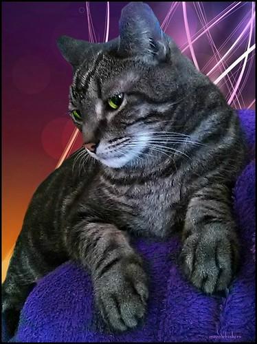 MY BIG, WONDERFUL CAT