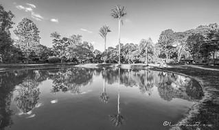 Bogota botanical garden reflects B&W