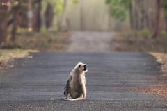 The Golden Hour (adityajoshi07) Tags: tadoba wildlife photoraphy maharashtra
