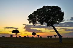Puesta de sol (gonzaloalfonsoordonezroman) Tags: sol puesta puestaesol atardecer ocaso anochecer