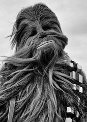 Thinking about Han (Miles From Nowhere Photography) Tags: starwars 501stlegion 501st jersey starwarsjerseygarrison chewbacca chewie