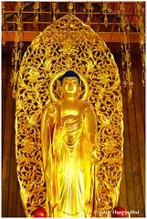 Buddha Looks At You - Steveston Buddhist Temple XT4554e (Harris Hui (in search of light)) Tags: harrishui fujixt1 digitalmirrorlesscamera fuji fujifilm vancouver richmond bc canada vancouverdslrshooter mirrorless fujixambassador xt1 fujixcamera fujixseries fujix fuji35mmf2 fujiprimelens fixedlens standardlens buddha stevestonbuddhisttemple steveston buddhisttemple doorsopenrichmond doorsopen statue sculpture buddhalooksatyou japanesebuddhism japanesebuddhisttemple spiritual spirituality gold golden