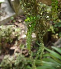 美景無處不在 (Jia ♔ 冰雪不聰明) Tags: 台灣 植物 綠 光影 光 影 taiwan plant green light shadow gf2 panasonic
