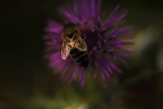 Drinking bee