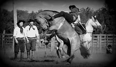 Mauro Passos Fernandes (Eduardo Amorim) Tags: gaúcho gaúchos gaucho gauchos cavalos caballos horses chevaux cavalli pferde caballo horse cheval cavallo pferd crioulo criollo crioulos criollos cavalocrioulo cavaloscrioulos caballocriollo caballoscriollos pampa campanha fronteira bagé riograndedosul brésil brasil sudamérica südamerika suramérica américadosul southamerica amériquedusud americameridionale américadelsur americadelsud cavalo 馬 حصان 马 лошадь ঘোড়া 말 סוס ม้า häst hest hevonen άλογο brazil eduardoamorim gineteada jineteada