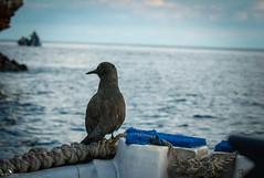 The Lonesome Traveller (pbmultimedia5) Tags: galapagos national park bird boat sea isabella island marine ocean animal wildlife pbmultimedia