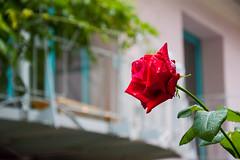 DSC_9866-54 (kytetiger) Tags: berlin scheunenviertel rosenthaler str flower art nouveau