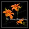Impressionist Lilies (wildlifephotonj) Tags: fineartphotographs fineartprints fineart fineartphotography lillies lily impressionist photoart