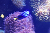 M00_4321.jpg (M. Jarrett) Tags: sydney2017 sydneyaquarium