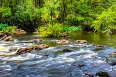 Hillsborough River State Park. June 2017 (tarell_sallie) Tags: rapids thonotassa zephryhills hillsboroughriverstatepark hillsboroughriver hillsborough statepark stateparks wildlife nature naturephotography wildlifephotography usa unitedtstates america unitedstatesofamerica june 2017 canon canont3i edit lightroom copyright exposure longexposure slowexposure rocks trees green current flow rural beautiful amazing palmtrees tampabay tampaphotographer tampabayphotographer tampabayphotography splendid discover