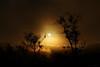 between shadows and light (birdcloud1) Tags: solstice sun trees solar light shadows lightanddark hemispheres summer winter lifeonatiltingplanet earth canoneos80d eos80d canon1855mmlens 1855mmlens amandakeoghphotography amandakeogh birdcloud1 betweenshadowsandlight silhouettes