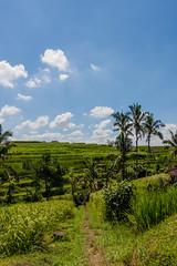 IMG_0638 (Ela&Piotr) Tags: bali indonesia indonezja jatiluwih ricefields