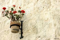 La flor de Yanahuara (Gaby Fil Φ) Tags: yanahuara arequipa patrimoniodelahumanidad ph560 perú sudamérica sillar ciudadescolonialesdeaméricalatina flores macetas