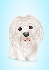 910005 (Osoq.com) Tags: wwwosoqcom pet animal caricature