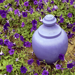 Surrounded by Petunias 06222017 (Orange Barn) Tags: thedomes mitchellparkdomes milwaukeewisconsin purple