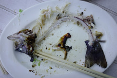 Fish bone on white dish (phuong.sg@gmail.com) Tags: after animal background bone bones bowl cook cuisine dead delicious dinner dirty dish eat eatting empty finish fish fishbone food fork fossil garbage head hunger hungry meal meat menu metal plate predator restaurant ruby salmon sauce scale seafood skeleton stick table taste tasty thai trout white