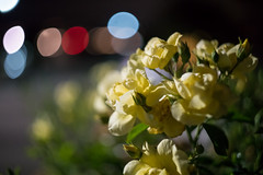 Helios First Shot (tourtrophy) Tags: flowers roses yellowroses bokeh helios44258mmf2 helio sonya7rii