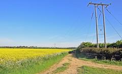 28024 (benbobjr) Tags: lincoln lincolnshire midlands eastmidlands england english uk unitedkingdom gb greatbritain britain british metheringham northkesteven fens fenland thefens meg metheringhamfen scopwick kirkbygreen blankney path footpath pathway publicfootpath bridleway rural