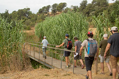 08072017-_POU7968 (Salva Pou Fotos) Tags: 2017 ajuntament fradera grupsenderista observatorifauna pont aiguamolls barberàdelvallès caminada pou
