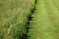 Cutting the grass (Heaven`s Gate (John)) Tags: lawn cut grass green nature landscape wild flowers packwood house garden lapworth johndalkin heavensgatejohn nationaltrust england