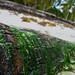Seaweed on a palm tree