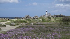 Près du phare *---- ° (Titole) Tags: phare lighthouse armeriamaritima gazondespagne titole nicolefaton path landscape wildflowers sky clouds pontusval