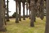 주상절리, Jusangjeollidae, Jejudo, South Korea (Tiphaine Rolland) Tags: southkorea korea corée coréedusud jejudo jeju jusangjeollidae 대한민국 주상절리 제주도 제주 palmiers palmtrees herbe grass nikond3000 nikon d3000 spring printemps île island