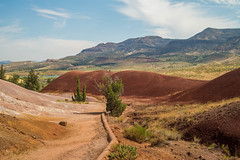 Trees (Jesse Maack) Tags: paintedhills johnday lightroom sony sonya58 travels oregon