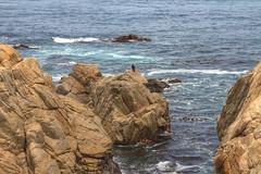 IMG_0166_168 Point Joe HDR (vicjuan) Tags: 20170625 美國 usa 加州 california montereycounty hdr tonemapping pebblebeach geotagged geo:lat=36609794 geo:lon=121957021 海 sea 太平洋 pacificocean 鳥 bird pointjoe