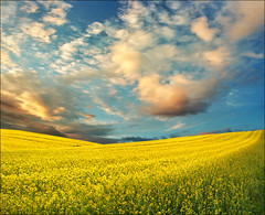 Spring light (Katarina 2353) Tags: landscape yellow field spring sunset katarina2353 katarinastefanovic