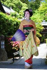 Maiko_20170528_57_16 (kyoto flower) Tags: eishoin temple tomitsuyu kyoto maiko 20170528 舞妓 栄摂院 富津兪 京都 mukousakura