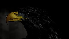 the last of its kind (Martin Nuernberg) Tags: dark light color key black bird wild animal mood expression