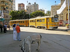 Égypte, dans la ville d'Alexandrie le Tram près de la Mosquée (Roger-11-Narbonne) Tags: égypte alexandrie mosquée port mer ville animaux tram