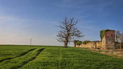 Scenery (DC P) Tags: scenery landscape landschaft tree ruin castle field line lines grass grassland sky beautiful bej soe nature fantastic adventure color dof depth digital explore farm green ngc outdoor old outside pov panorama serene travel trail view wideangle world mystic light lighting