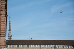 Turin minimal. (sinetempore) Tags: turinminimal torino turin mole antonelliana cielo sky blu blue uccello bird nuvole clouds minimalismo moleantonelliana finestre windows