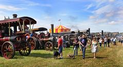 A line of steam (PentlandPirate of the North) Tags: bigwheel vintage cheshiresteamrally tractionengines daresbury runcorn england fairground outdoorshows wallofdeath