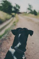 Should i stay or should i go? (mripp) Tags: art kunst vintage retro old animal animals dog hund orientation landscape landschaft leica q