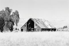 Greenville Road (Wayne-K) Tags: bw barn california film greenvilleroad hoyak2yellowfilter ilford ilfordxp2super400 livermore nikon nikon105mmf25ais nikonfm2 windpower windmills