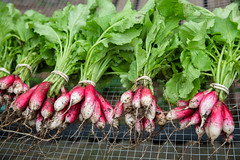 all food in the summertime is better (catklein) Tags: radish fresh organic dirt