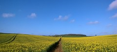 1 of 2 photos - same place, same time, give a year and a minute! (Jo. Jo.) Tags: yellow vanishing point