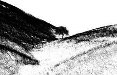 P3810190aa_edited-1 (gpaolini50) Tags: landscape luce bw biancoenero blackandwhite photoaday photography photographis photographic photo phothograpia photoday paesaggio emotive esplora explore explored emozioni explora