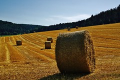 Erntezeit - Harvest time (cammino5) Tags: ernte harvest gerste barley güntersleben franken juli 2017